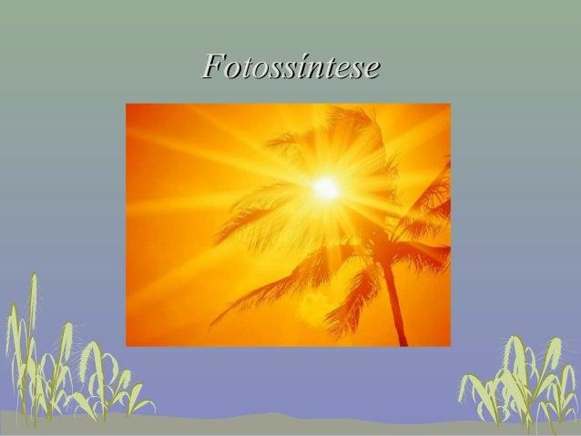 FotossínteseFotossíntese