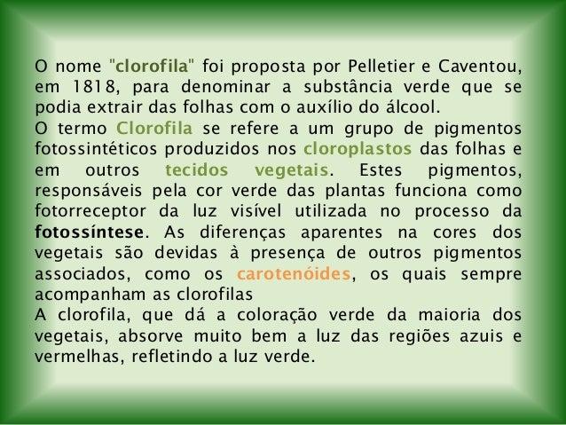 """O nome """"clorofila"""" foi proposta por Pelletier e Caventou, em 1818, para denominar a substância verde que se podia extrair ..."""