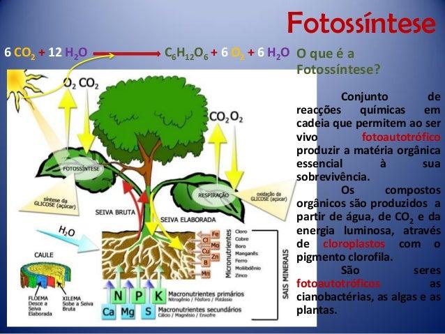 Fotossíntese  O que é a Fotossíntese?  Conjuntodereacçõesquímicasemcadeiaquepermitemaoservivofotoautotróficoproduziramatér...