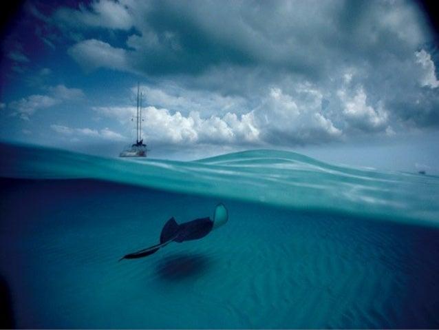 Desde entonces, fue el responsable de más de 50 artículos sobre la vida en los océanos y todo lo que se relaciona con ella...