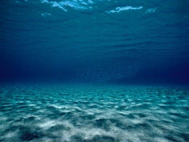 Fotos sub mar_difi