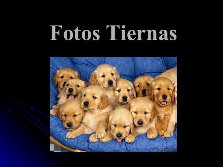 Fotos Tiernas