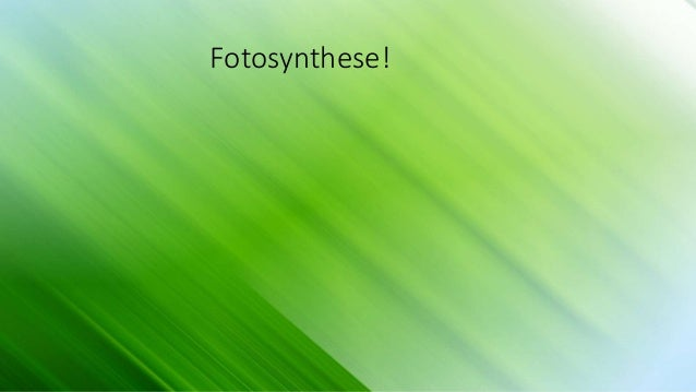 Fotosynthese!