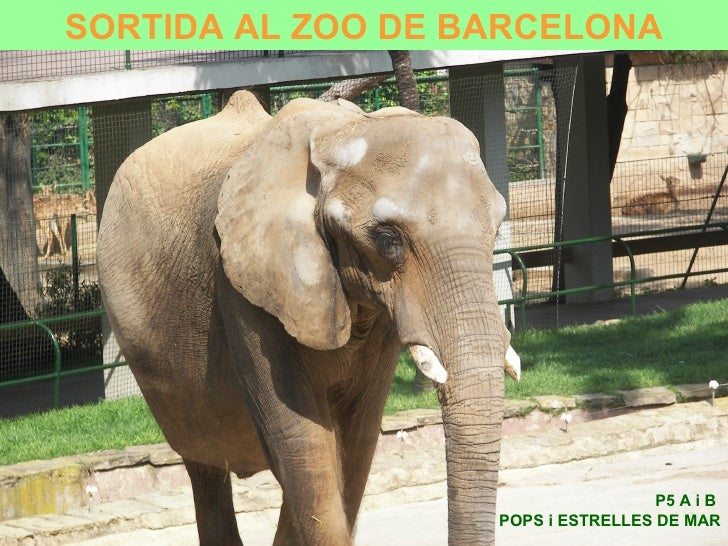 P5 A i B  POPS i ESTRELLES DE MAR SORTIDA AL ZOO DE BARCELONA