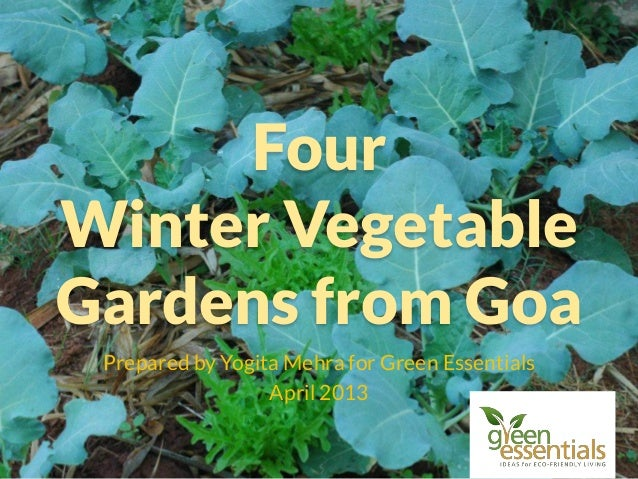 Four Winter Vegetable Gardens from Goa Prepared by Yogita Mehra for Green Essentials April 2013