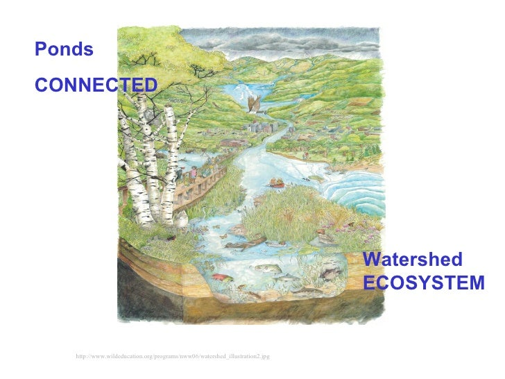http://www.wildeducation.org/programs/nww06/watershed_illustration2.jpg Watershed ECOSYSTEM   Ponds CONNECTED