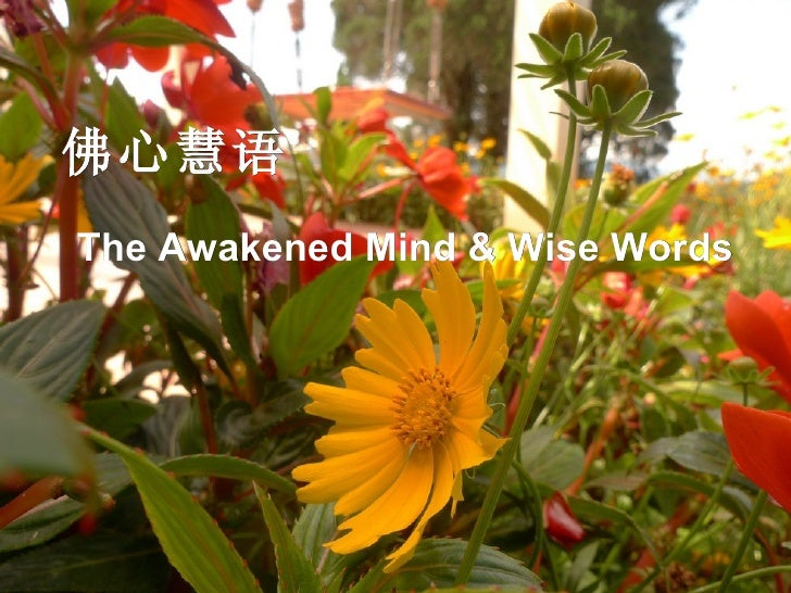佛心慧语 The Awakened Mind & Wise Words