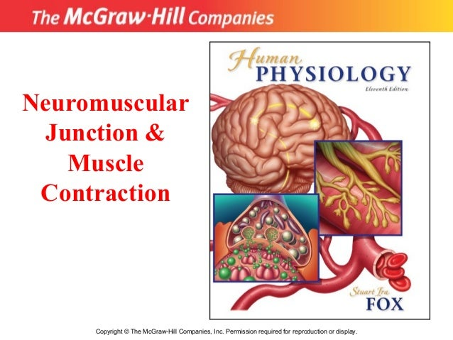 Copyright © The McGraw-Hill Companies, Inc. Permission required for reproduction or display. Neuromuscular Junction & Musc...