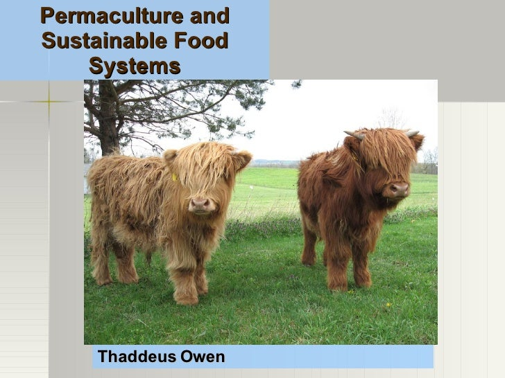 Thaddeus Owen Permaculture and Sustainable Food Systems