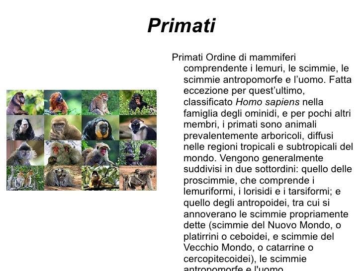 Primati Primati Ordine di mammiferi comprendente i lemuri, le scimmie, le scimmie antropomorfe e l'uomo. Fatta eccezione p...