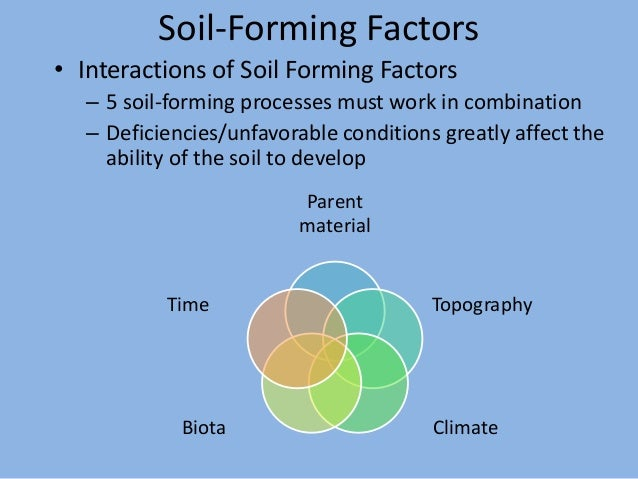 Fpt 2093 soil science week 6 factors amp processes of soil for Soil forming factors
