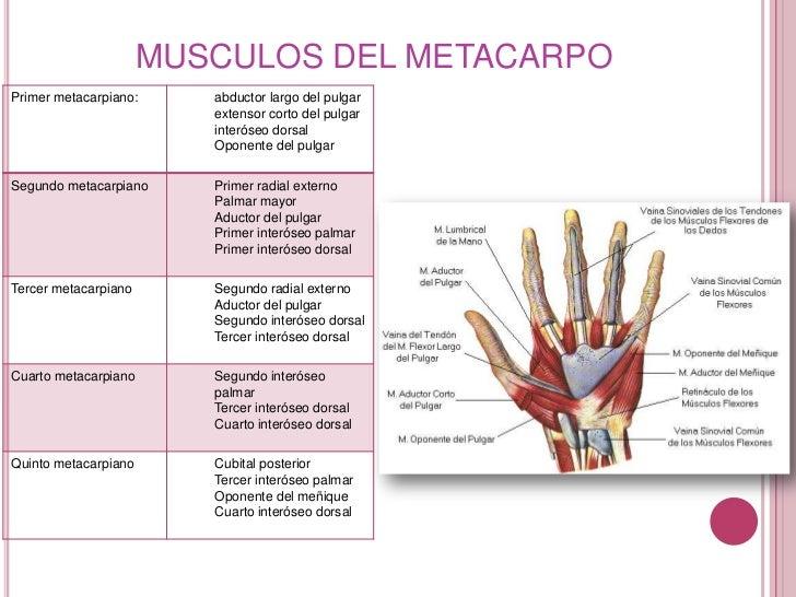 fractura de 1 y 5 metacarpiano