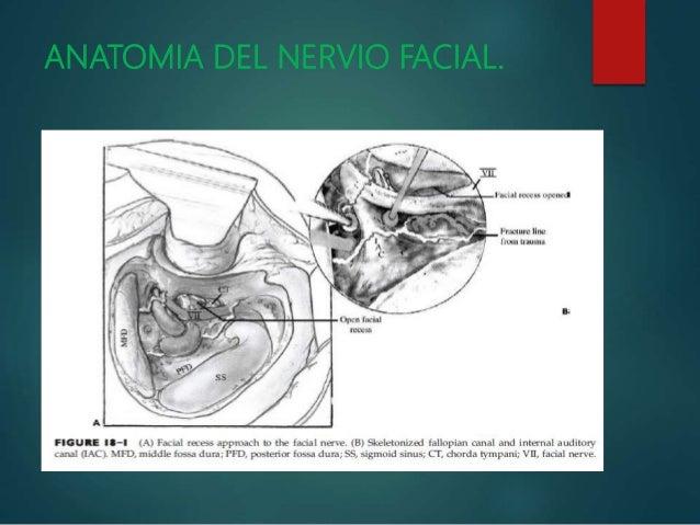 FRACTURA DE HUESO TEMPORAL - DR. OMAR GONZALES SUAZO.