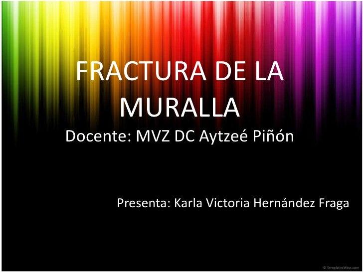 FRACTURA DE LA MURALLADocente: MVZ DC AytzeéPiñón<br />Presenta: Karla Victoria Hernández Fraga<br />