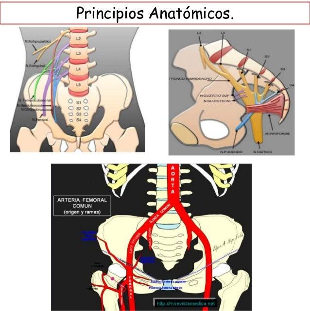 Generalidades de Fractura de pelvis y acetábulo . Slide 3