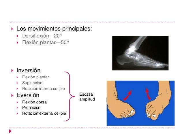    Los movimientos principales:       Dorsiflexión—20°       Flexión plantar—50°   Inversión       Flexión plantar   ...
