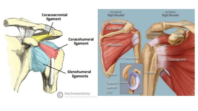 Fracture And Dislocation Of The Shoulder Girdle