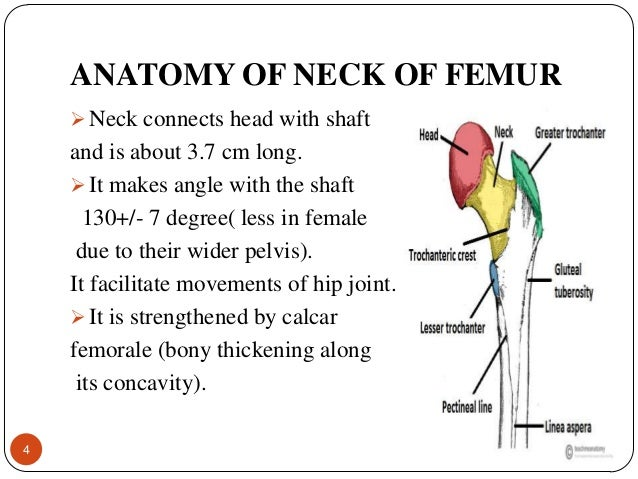 Fracture neck of femur ccuart Gallery