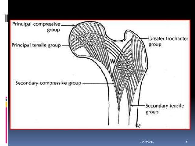 fracture neck of femur 3 638