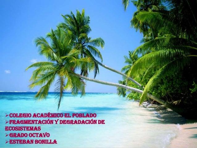 Colegio Académico El Poblado Fragmentación y Degradación de Ecosistemas Grado Octavo Esteban Bonilla