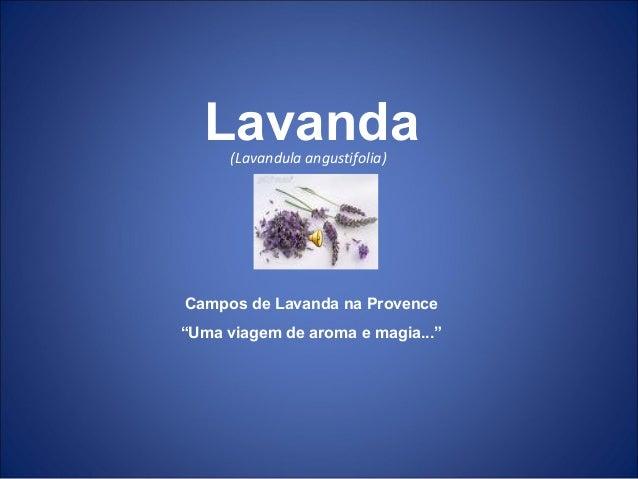 """(Lavandula angustifolia) Campos de Lavanda na Provence """"Uma viagem de aroma e magia..."""" Lavanda"""