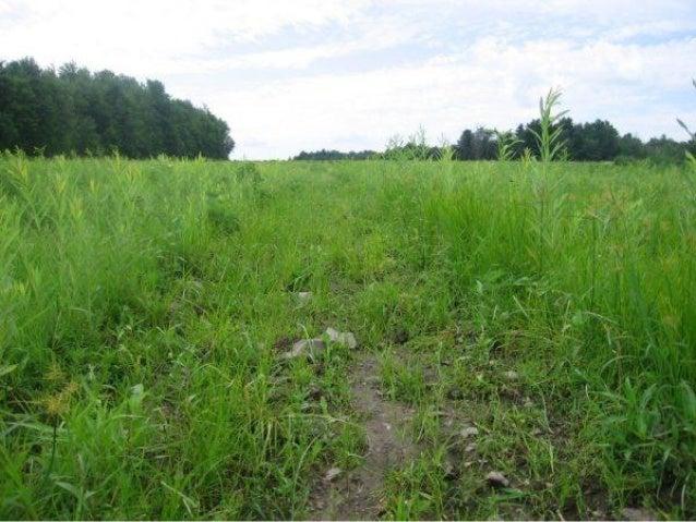 Effet de la fertilisation• Plusieurs projets de recherches avec  – Lisier, fumier, boues municipales• Augmentation des ren...