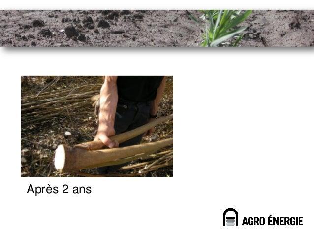 Fertilisation avec boue•   Culture non-alimentaire•   Valorisation locale (peu de transport)•   Possibilité de revenu pour...