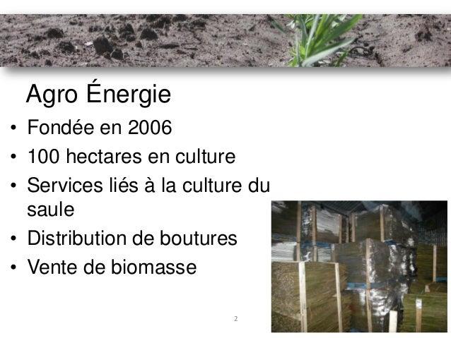 Agro Énergie• Fondée en 2006• 100 hectares en culture• Services liés à la culture du  saule• Distribution de boutures• Ven...