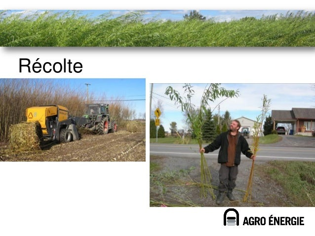 Rendements records                        Production                Production        Non-fertilisé                Fertili...
