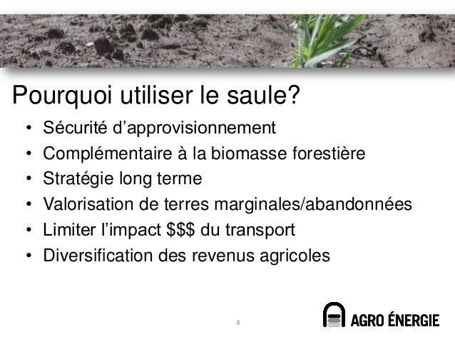 Pourquoi utiliser le saule? •   Sécurité d'approvisionnement •   Complémentaire à la biomasse forestière •   Stratégie lon...