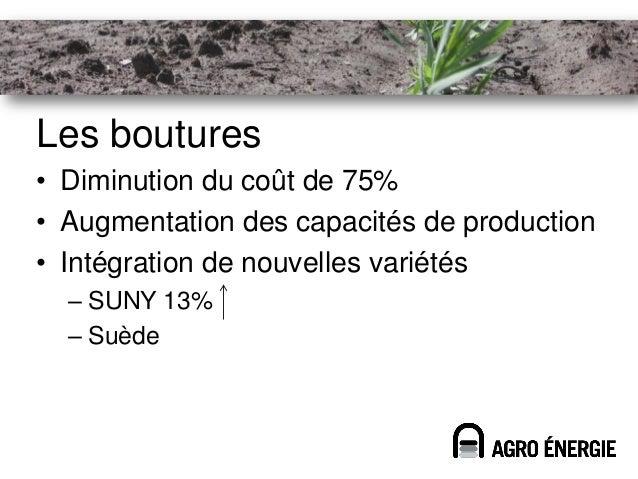 Les boutures• Diminution du coût de 75%• Augmentation des capacités de production• Intégration de nouvelles variétés  – SU...