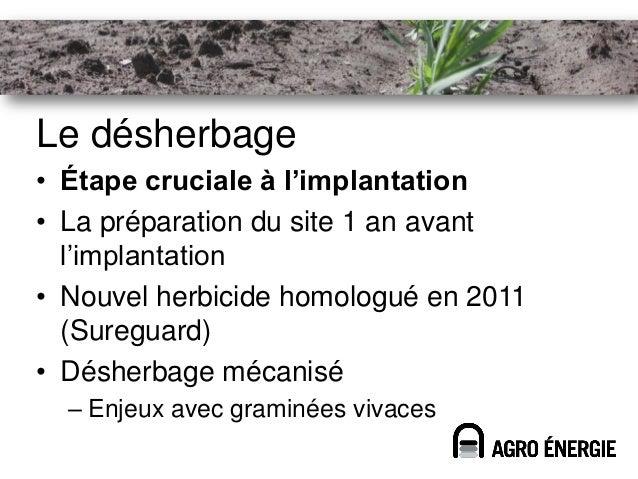 Le désherbage• Étape cruciale à l'implantation• La préparation du site 1 an avant  l'implantation• Nouvel herbicide homolo...
