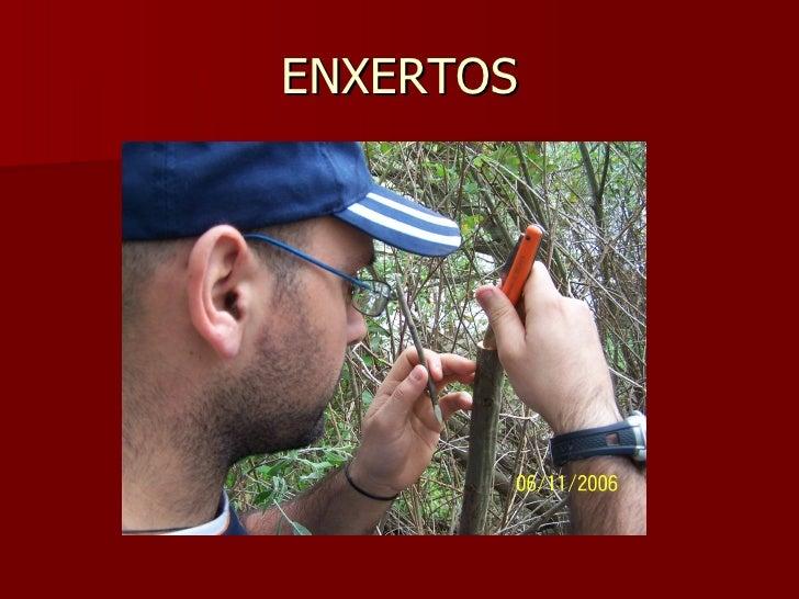 ENXERTOS
