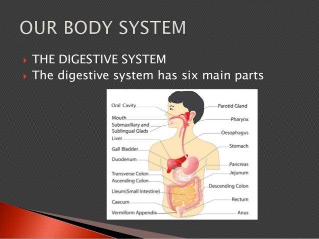  THE DIGESTIVE SYSTEM  The digestive system has six main parts