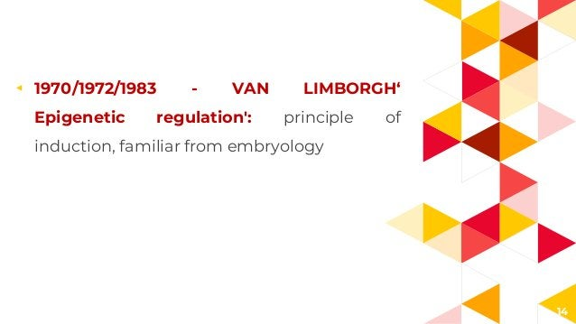14 ◂ 1970/1972/1983 - VAN LIMBORGH' Epigenetic regulation': principle of induction, familiar from embryology