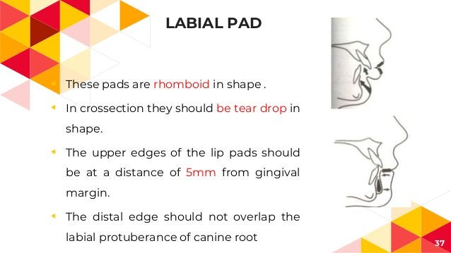 LABIAL PAD ◂ These pads are rhomboid in shape . ◂ In crossection they should be tear drop in shape. ◂ The upper edges of t...