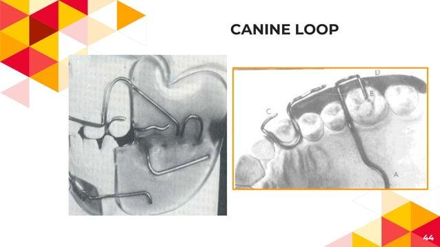 CANINE LOOP 44