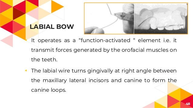 """LABIAL BOW ◂ It operates as a """"function-activated """" element i.e. it transmit forces generated by the orofacial muscles on ..."""