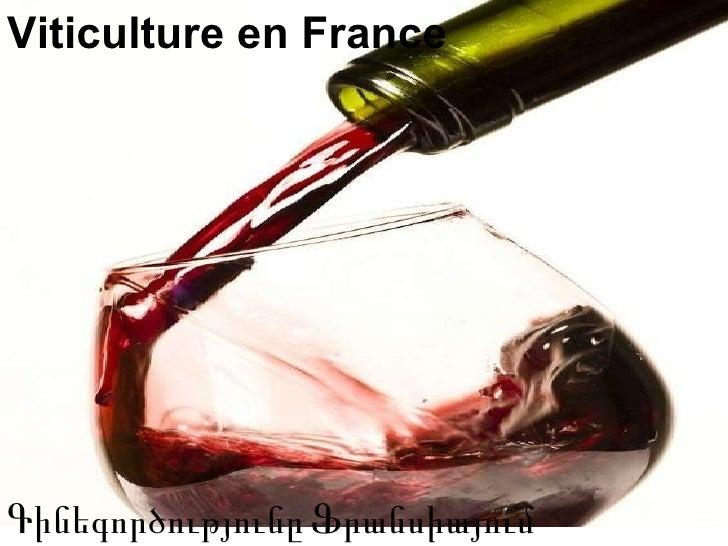 Viticulture en France Գին եգործությունը   Ֆրանսիայում