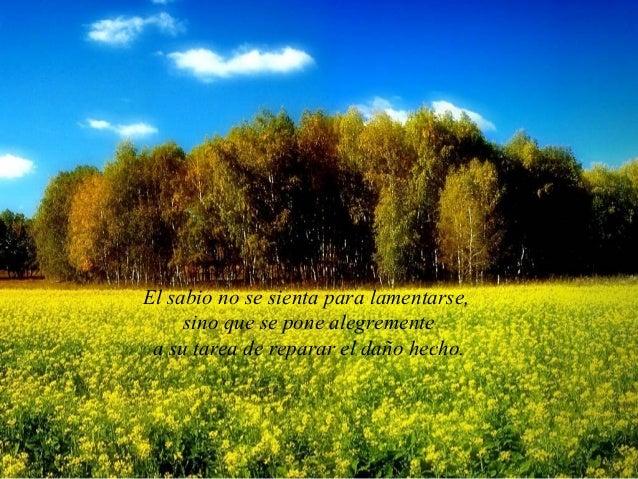 El sabio no se sienta para lamentarse,     sino que se pone alegremente a su tarea de reparar el daño hecho.