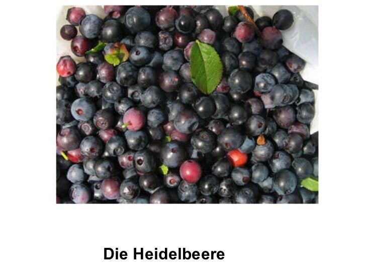 Die Heidelbeere