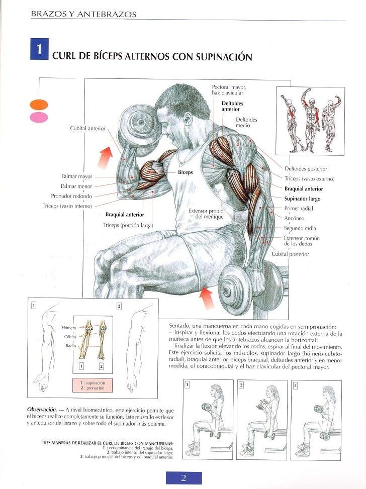 Guía de los movimientos de musculación - descripción