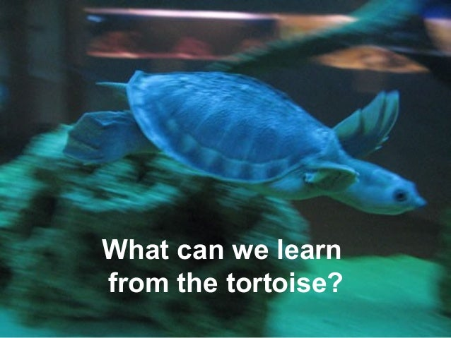 What can we learnfrom the tortoise?