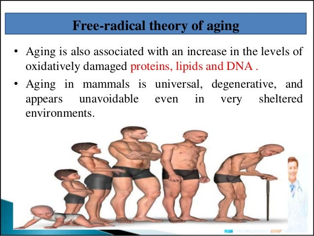 free radicals and aging Free radical theory of aging theories of aging the free radical theory this now very famous theory of aging was developed by denham harman md at the university of nebraska in 1956 the term free radical free radicals come in a hierarchy.