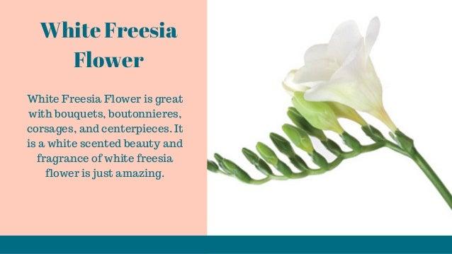 Looking to buy freesia flowers white freesia flower mightylinksfo