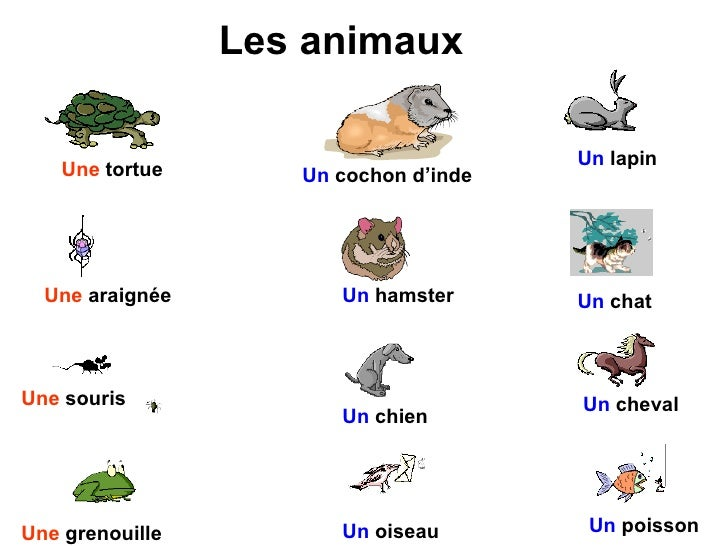 French animal a la maison all for Animaux nuisibles maison