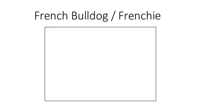 French Bulldog / Frenchie