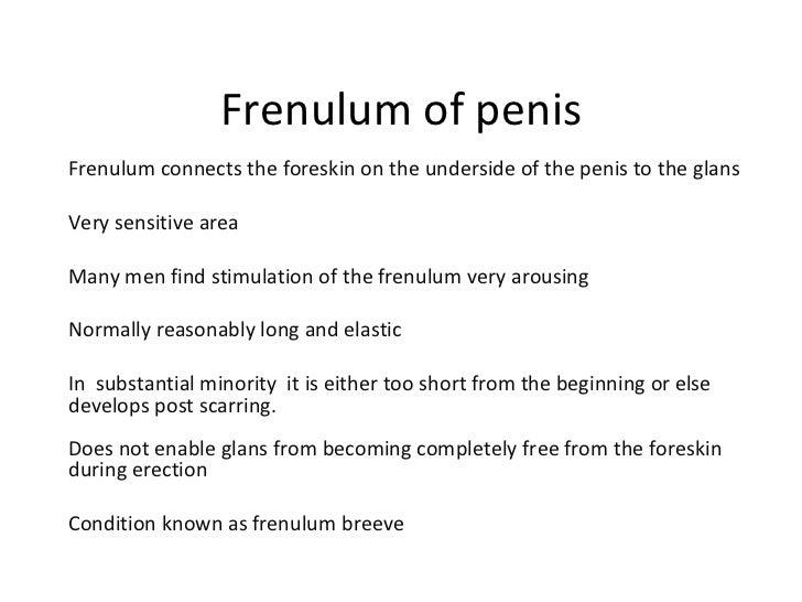 Frenulum in men