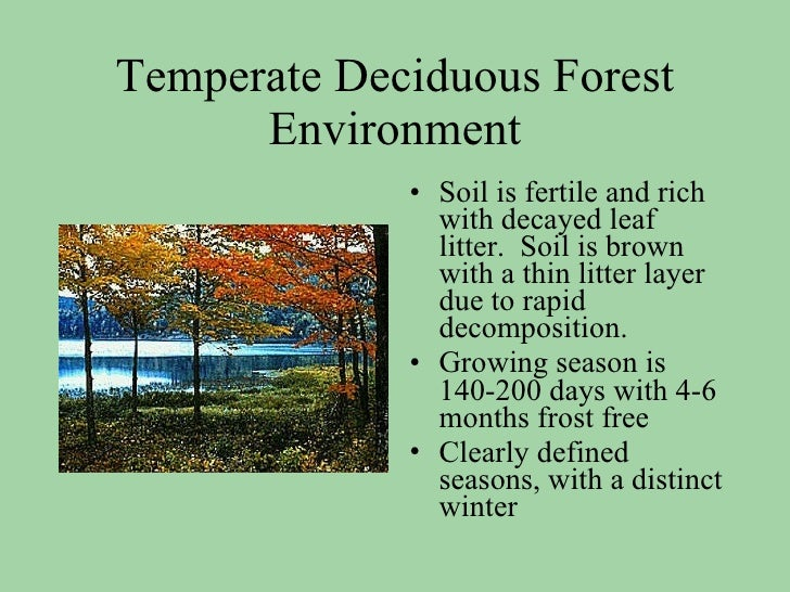 temperate deciduous biome paper Temperate deciduous forest essays: over 180,000 temperate deciduous forest essays, temperate deciduous forest term papers, temperate deciduous forest research paper, book reports 184 990 essays, term and research papers available for unlimited access.