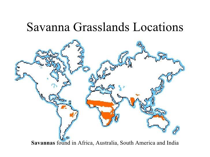 Freshman biome presentation rev savanna grasslands gumiabroncs Image collections